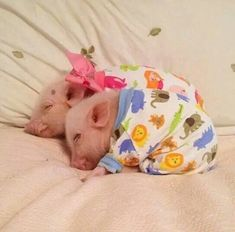 I'm at a loss for words. Seriously. Piggies in pajamas. Wow.