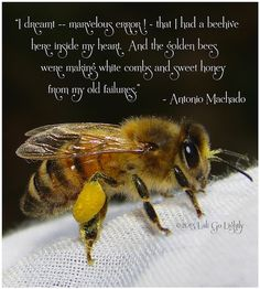 One of my favorite quotes! I took this shot as she was resting on my arm. I really love my bees!