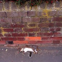 A dead squirrel in Luton, England. Go to http://www.tyleanpolley.com for a free dose of morbid.