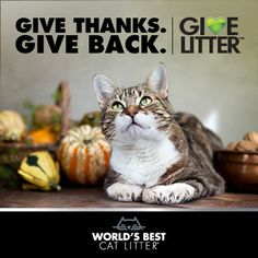 Vote for WARL today!  We're celebrating Thanksgiving with a new round of GiveLitter™ that allows online voters to donate up to 30,000 pounds of litter to two New England animal shelters. Voting runs from November 18th through the 24th. Vote daily to donate litter to Providence Animal Rescue League in Rhode Island and Worcester Animal Rescue League in Massachusetts. Click to vote!