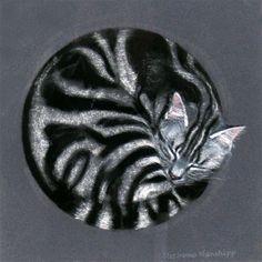 Chats peints serie B   ( S.M)