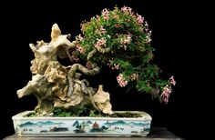 Three major components come together in this colorful root-over-rock bonsai. A flowering tree (Malpighia pendiculata), a pot that some would die for (hand painted Chinese?) and an extraordinarily craggy rock. This bonsai and the others in this post are by Gede Merta.