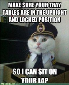 Captain Kitteh :-)