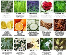 Great information on Aromatherapy