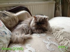 Please help us find Vimto the Cat missing in the Rh19 area. For more details click http://j.mp/YrIbNz
