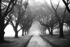 """Ansel Adams. Fotógrafo y ambientalista. (EEUU-1902-1984). Admiro su obra y su pensamiento, donde habla de Fotografía como un evento Externo, que son las cosas que ocurren en el exterior, el paisaje, lo que ocurre en el tiempo y en el espacio. En contraste, en lo creativo, dice que aparece el evento Interno, lo que pasa dentro de la mente cuando tu la ves. La clave reside en ver el ojo de la mente, el le llamó Visualización"""". """"Con la Artesanía, Esfuerzo y Practica, puedes hacer una…"""