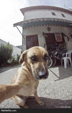 23 Funny Animal Selfies