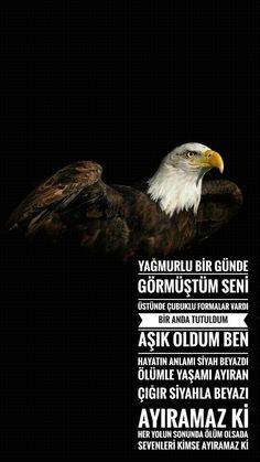 Beşiktaş #beşiktaş #karakartal #kartal