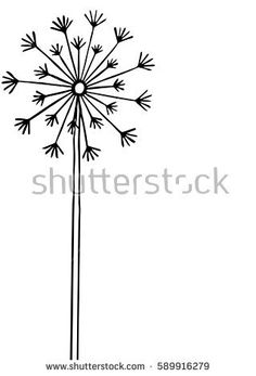 Hand drawn black silhouette dandelion on a white background.