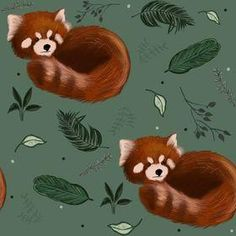 Exclusive Red Panda Harems - 0-3months