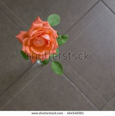 Orange rose on brown background Image ID:464540561 Copyright: Alina Craita