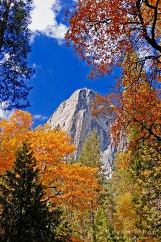Fall color under the Washington Column, Yosemite Valley, Yosemite National Park; photo by Russ Bishop