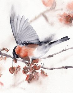 Watercolor Print Bullfinch Bird: modern loose design. Wall fine art poster for interior, white, red and orange colors. Giclée quality. Worldwide shiping.