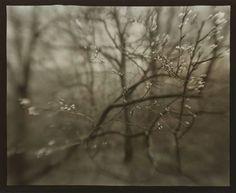 The Coming of Spring        1968      Josef Sudek, Czechoslovakian, 1896–1976