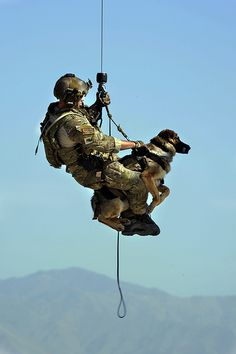 Military service dogs I know this doesn't fit firefighting but SAR dogs military dogs and all other working dogs are amazing! Gotta love our furry friends! Military Working Dogs, Military Dogs, Police Dogs, Military Service, Military Surplus, Military Life, Military Style, War Dogs, Mans Best Friend