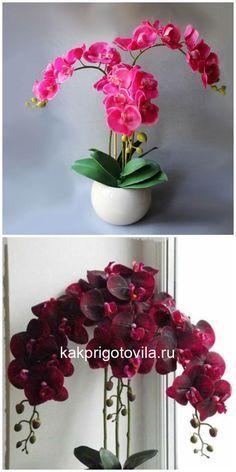 Flowers Perennials Hydrogen peroxide - the best fertilizer for orchids - # -# hydrogen best # orchids Small Pink Flowers, Home Flowers, Beautiful Flowers, Phalaenopsis Orchid, Orchids, Small Garden Uk, Garden Plants, House Plants, Garden Weeds
