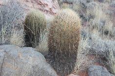 https://flic.kr/p/j5Svdg   Cactus, Zion National Park   아들 딸 조건없는 진정한 사랑으로 키우세요 그리고 인성교육은 이렇게' 부모, 소아과 전문의, 의학도, 간호학 학도, 모든 초등 학교 교사들은 물론이고 모든 분들이 적어도 한번 정도 읽어야할 최신 육아 바이블   부모도 반의사가 되어야 한다 www.koreapediatrics.com