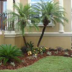 Tropical Landscaping on Pinterest Tropical Gardens