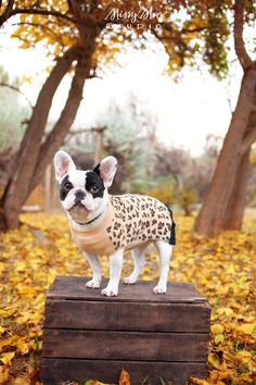 Am I a dog? Am I leopard? Make up your mind, will you? SMH..;)