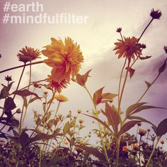 This week's #mindfulfilter theme: Earth. Be sure to tag @mindfulfilter on Instagram. We'll share your work throughout the week. Thanks for your enthusiasm during our pre-launch! #EarthDay #mindfulness #photography