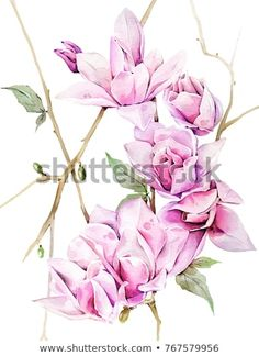 Find Watercolor Illustration Hand Painted Magnolia stock images in HD and millions of other royalty-free stock photos, illustrations and vectors in the Shutterstock collection. Thousands of new, high-quality pictures added every day.