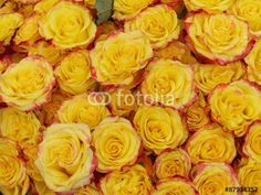 Gelbe Rosenblüten an einem Stand auf dem Wochenmarkt in Gießen an der Lahn in Hessen