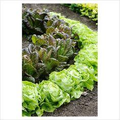 New idea for vegtables garden-space