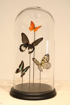 Glass dome with butterflies Butterfly Wall Decor, Butterfly House, Butterfly Decorations, Quirky Decor, Modern Decor, Taxidermy Decor, Hawaiian Decor, Floral Vintage, Alice In Wonderland Wedding
