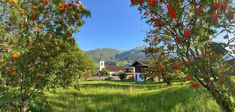 Beerenhafter Ausblick auf das Dietersbachtal - Piesendorf und den Maiskogel in Kaprun. #bergevollerschätze #mountainsfulloftreasures #piesendorf #niedernsill