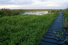 The Iberá Wetlands are a mix of swamps, bogs, stagnant lakes, lagoons, natural slough and courses of water.