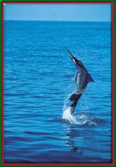 deep sea fishing. I've been wanting to deep sea fishing for blue marlin for a long time! Wish I had someone to go with!
