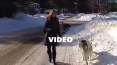 Dans cette vidéo, Nadine explique comment faire pour qu'un chien arrête de tirer en laisse lors de la promenade. Elle ne recherche pas une marche au pied,