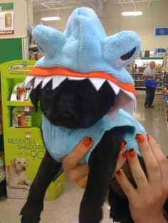 I bet cooper would want this to be on Gus Amor Pug, Happy Pug, Black Pug, Adorable Dogs, Pug Love, Greed, Sharks, Handsome Boys, Make Me Smile