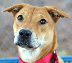 N.J. pets in need: Feb. 6, 2017