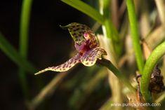 Floriferous epiphytic orchid species! - Pumpkin Beth Flowering Plants, Planting Flowers, Miniature Orchids, Bottle Garden, Terrarium Plants, Large Flowers, Plant Care, Flower Petals, More Pictures