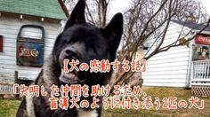 【1分涙腺崩壊】失明した仲間を助けるため、盲導犬のように付き添う2匹の犬【犬の感動する話】  目が見えなくなってしまった仲間に、まるで盲導犬のように付き添ってあげている2匹の犬が話題となっています。   ☆☆☆☆☆☆ 涙腺崩壊-1分で感動!では、 泣ける話、感動する話を 厳選して配信しています。   音と画像で心震える感動を…。  チャンネル登録すると 新しい動画がスグに見れます☆ ▼▼▼ http://www.youtube.com/subscription_center?add_user=namidaafureru