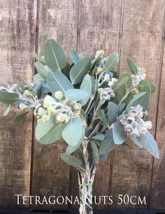 Tetragona Nuts are so popular! Available March. Cut Flowers, Wild Flowers, Harvest, Behind The Scenes, March, Seasons, Popular, Grey, Plants