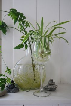 42 Innovative Indoor Water Garden Ideas For Best Indoor Garden Solution - Creating indoor water gardens is almost equivalent with taking the pond from outside and bringing it inside in smaller dimensions. Most of the people . Plants Grown In Water, Water Plants Indoor, Aquatic Plants, Indoor Garden, Garden Solutions, Plants Are Friends, House Plants Decor, Hydroponic Gardening, Green Plants