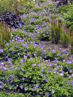 Months of Bloom - Perennials That Bloom in Spring on HGTV