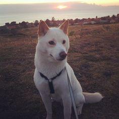 Sitting still at Fred Hesse Jr. Community Park - Rancho Palos Verdes, CA - Angus Off-Leash #dogs #puppies #cutedogs #dogparks #california #ranchopalosverdes #angusoffleash