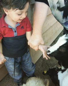 #zoodellemaitine #vitamia #renzo #giornatainfamiglia #bambinienatura2016 #caprette #bambinieanimali
