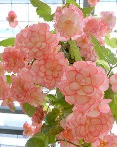 Exotic Flowers, Love Flowers, Beautiful Flowers, Indoor Garden, Indoor Plants, Belle Plante, Inside Garden, My Secret Garden, Secret Gardens