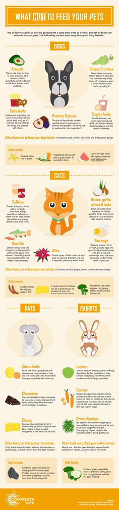 What not to feed your pets - Pet insurance - Gocompare.com