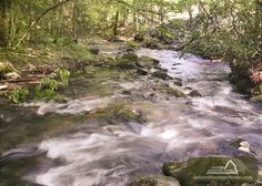 Twin Creeks - This 4 bedroom cabin has a gorgeous view of a Smoky Mountain stream.