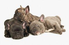 J. NICOLE SMITH – PUPPYHOOD (BOOK) #J.NicoleSmith #PuppyHood #Photograph #Photography #puppies