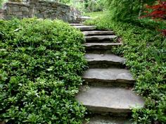 I would like a path like this one day.