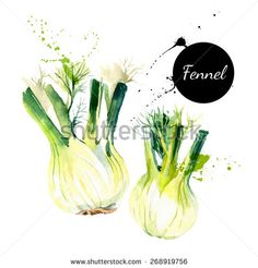 Kitchen herbs and spices banner. Vector illustration. Watercolor fennel - stock vector
