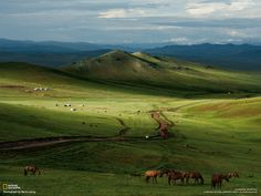 Horses, Mongolian Steppe Source: Mongolia Picture - Landscape Wallpaper - National Geographic Photo of the Day Landscape Wallpaper, Nature Wallpaper, Windows Wallpaper, Watercolor Landscape, Mongolia, National Geographic Fotos, Oh The Places You'll Go, Places To Visit, Laos