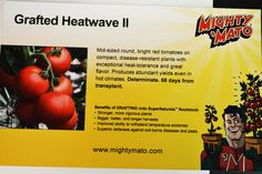 We will carry Mighty 'Mato Heatwave II's!