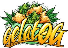 GelatOG is the culmination of bringing together two much-in-demand West Coast strains, viz Gelato and OG Kush If you are looking for a strain with a delici, Seeds Cannabis Plant, Ganja, Weed Wallpaper, Weed Strains, Seed Shop, Marijuana Art, Stoner Art, Weed Art, Tattoo Ideas